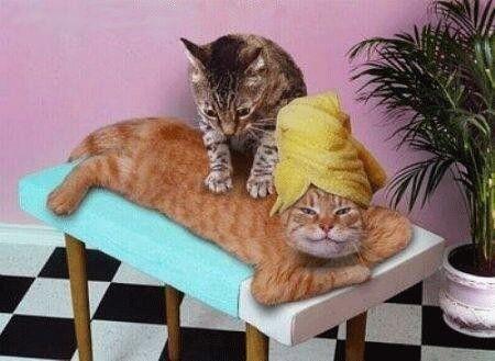Chat rigolo sauna et massage - Photo de chat rigolo ...